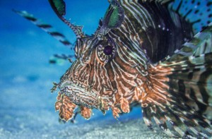 our liveaboard tour lets you come face to face with marine life