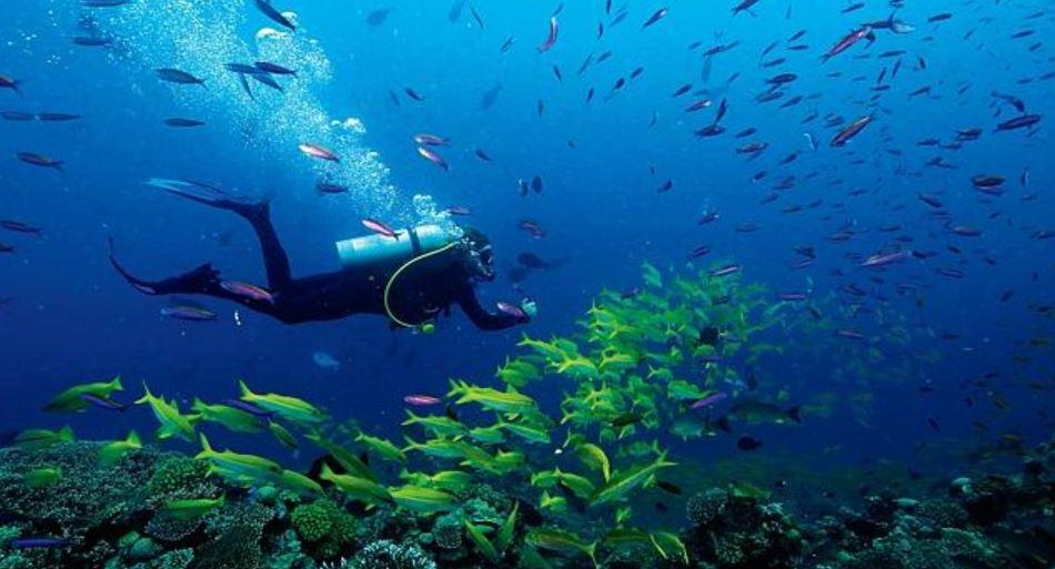 ribbon-reefs - liveaboard