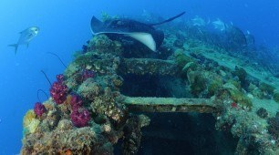 ss yongala top ten dive sites